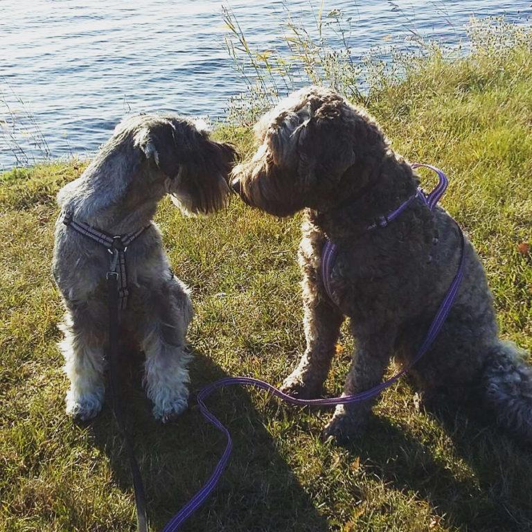 Terapihund Maja och Kajsa