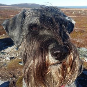 Maja Skolhund