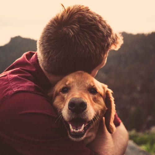 Hitta sociala tjänstehundar nära dig