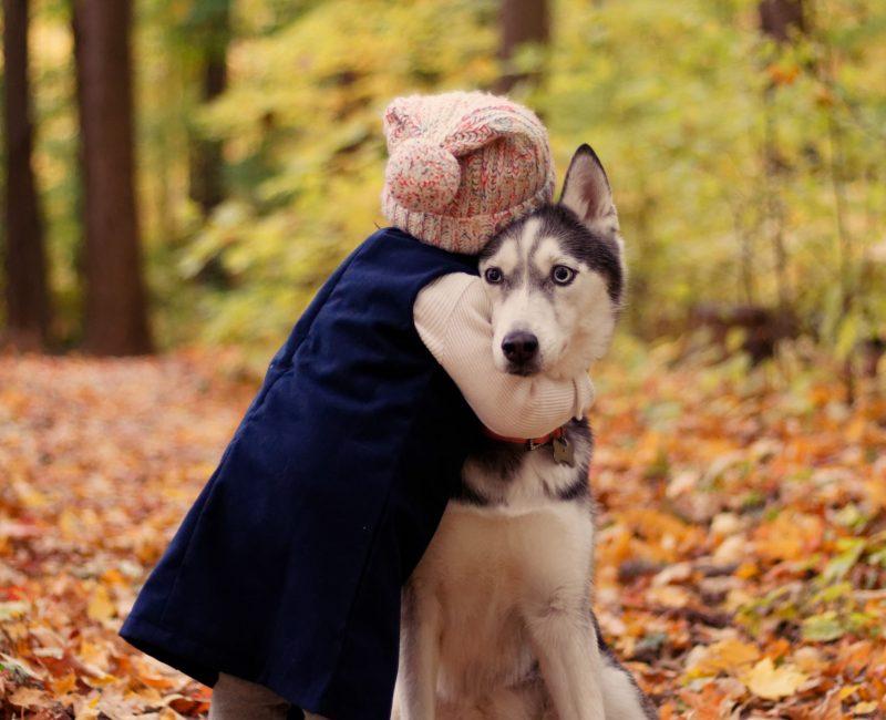 fördelar med sociala tjänstehundar