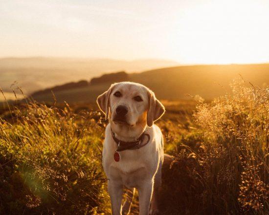 anlita en terapihund