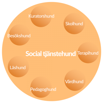 Social tjänstehund områden