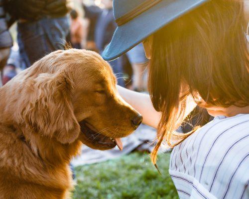 Varfor terapihund